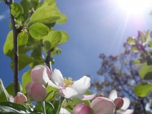 Blüten und Sonnenschein